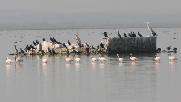 Chhari Lake mix - Chaari Lake, Gujarat, India